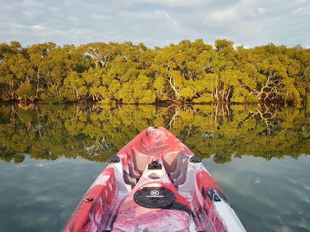 A beautiful morning for a paddle! I was up early and on the water before sunrise today. The Boondall Wetlands were alive with the sounds of birdsong, the water seemed like glass and the first rays of sunlight were so warm and soothing. A terrific way to start the day!  #brisbane #kayak #kayaking #nature #visitbrisbane #environment #natgeotravel #awesomeearth #earthpix